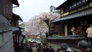 さくら京都